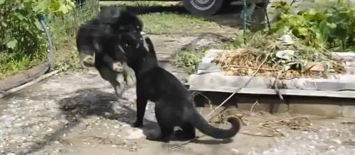 cat-vs-dog1