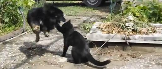 cat-vs-dog2