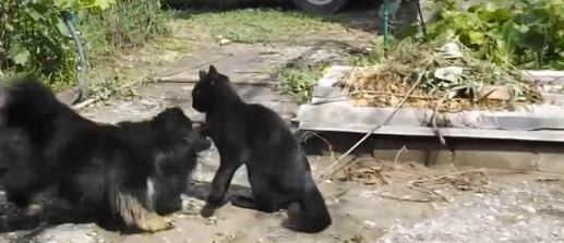 cat-vs-dog3