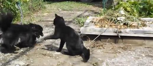cat-vs-dog4