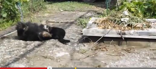 cat-vs-dog5
