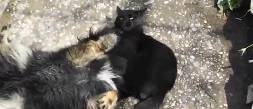 cat-vs-dog6